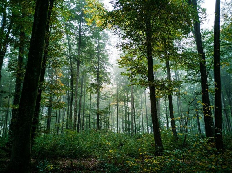 HOW PLANTING TREES OFFSETS CARBON